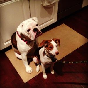 Dogswaitingfortreat